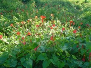 flower-kewkradong-biplob-rahman