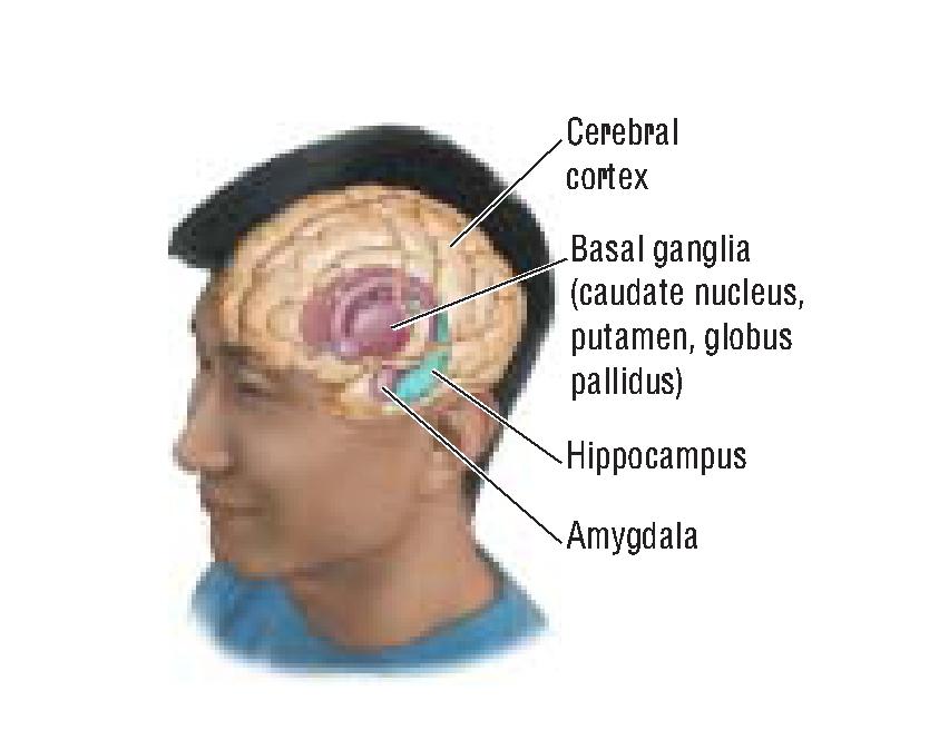 brain-15