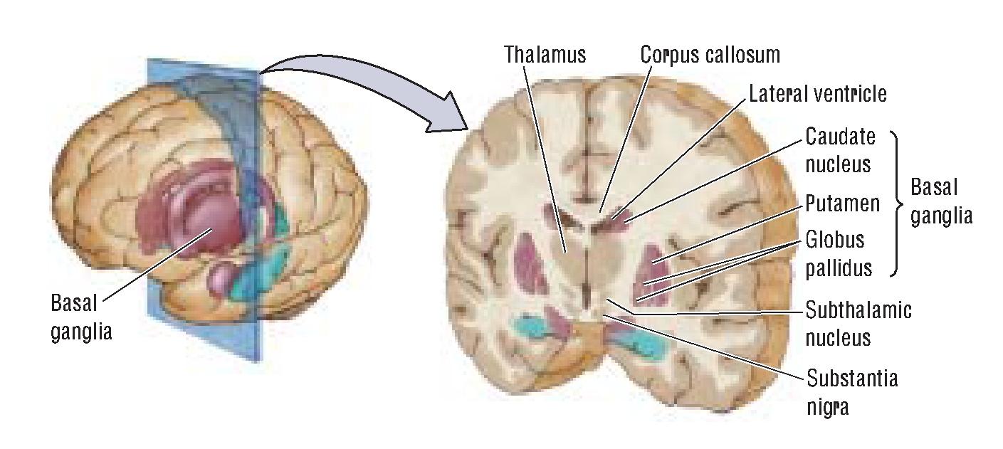 brain-17