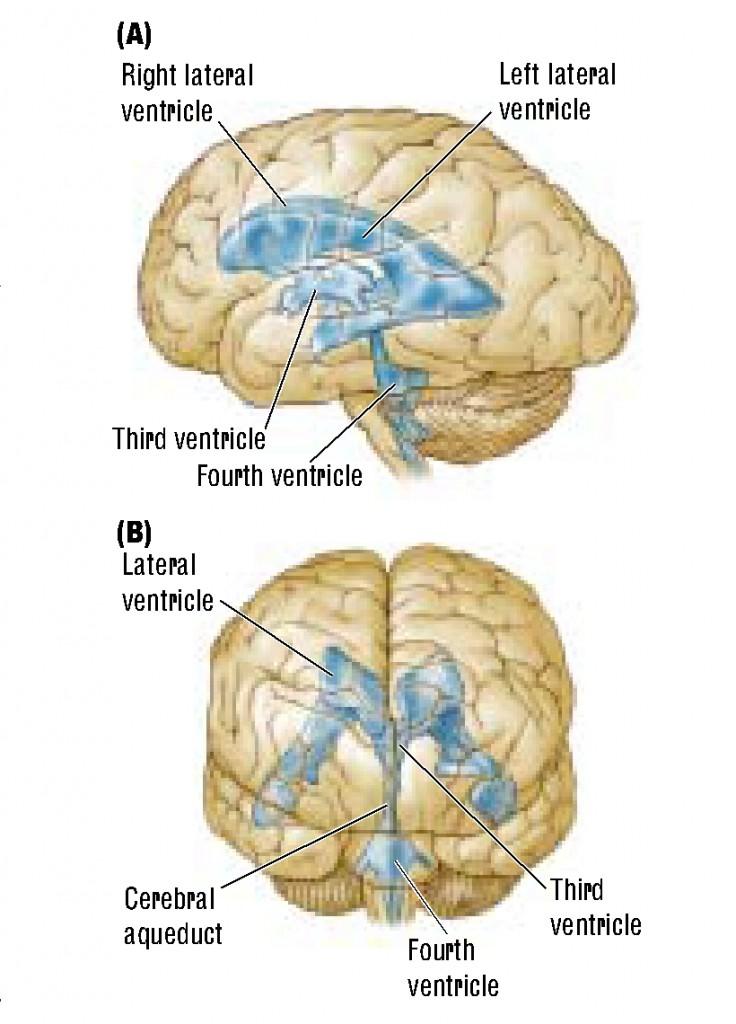 brain-8