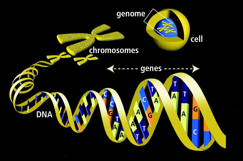 DNA-genes-radio-controlled-