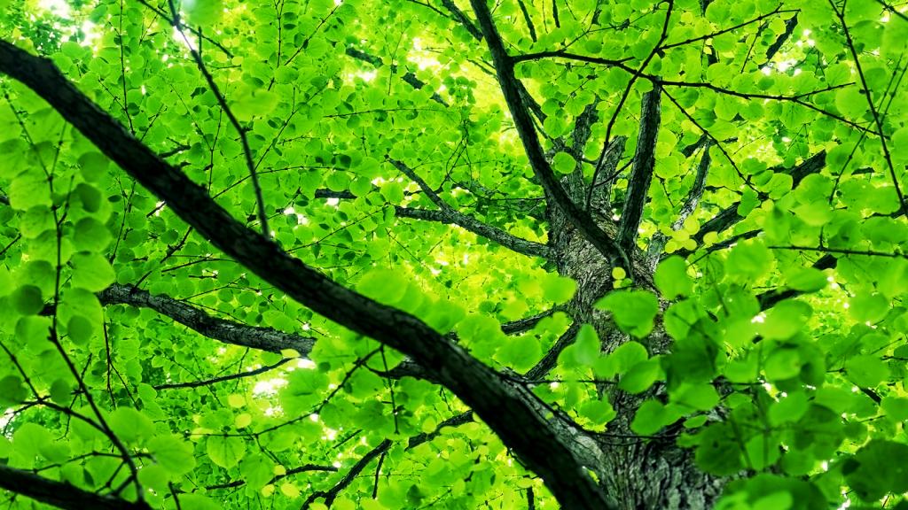 springtreeleaves-wall-inkbluesky